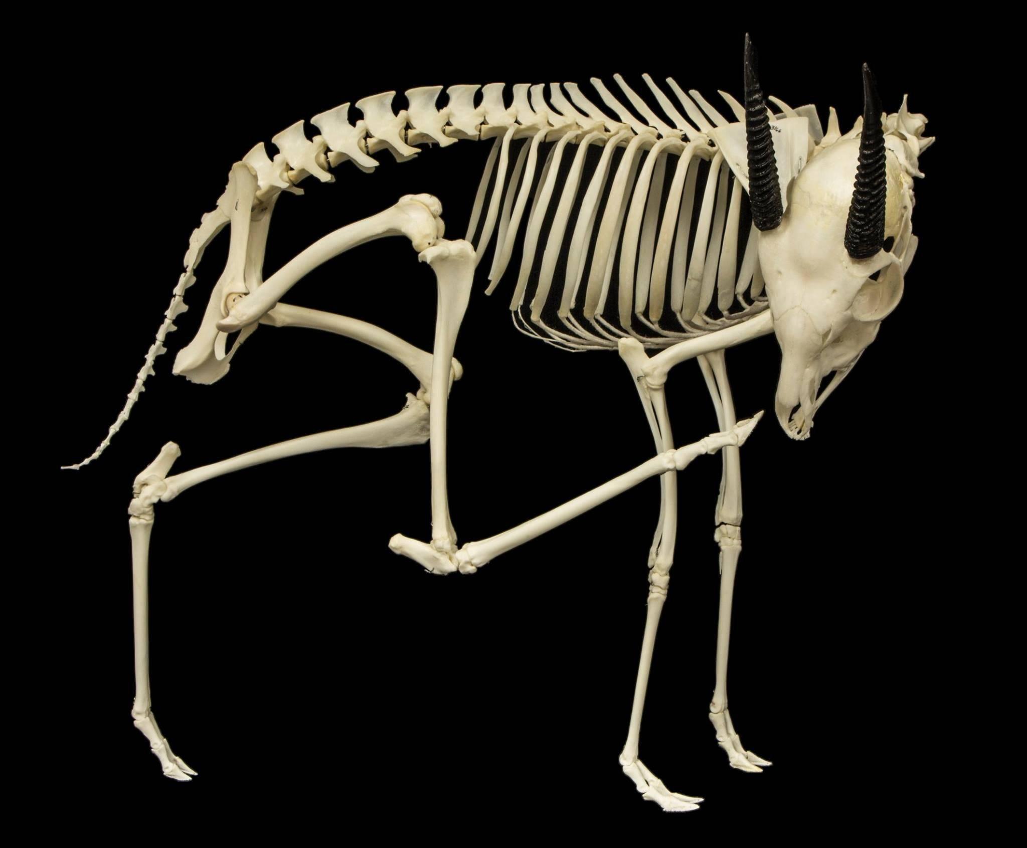 Анатомия кошки и особенности физиологии