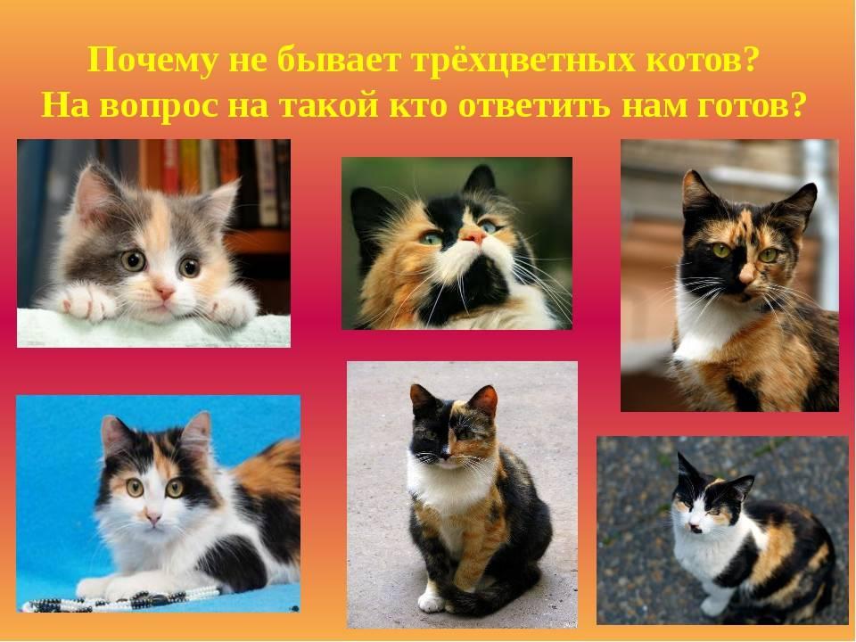 К чему пришел трехцветный кот или кошка в дом: приметы