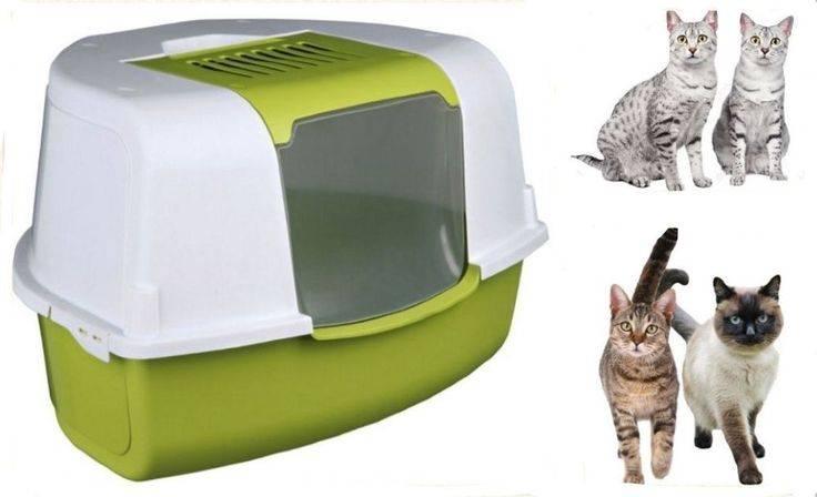 """Как выбрать лоток и наполнитель для котенка   блог ветклиники """"беланта"""""""
