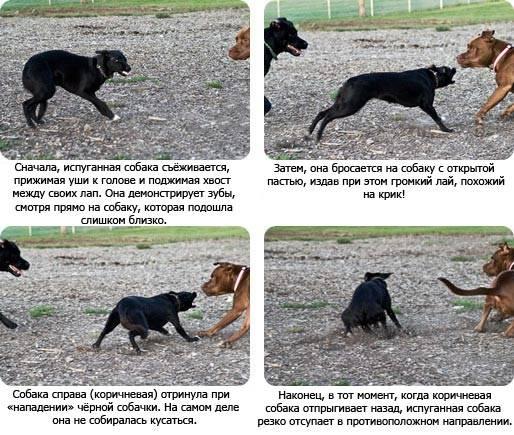 Почему собаки всегда так безумно рады, когда видят своего хозяина — 4 лапки