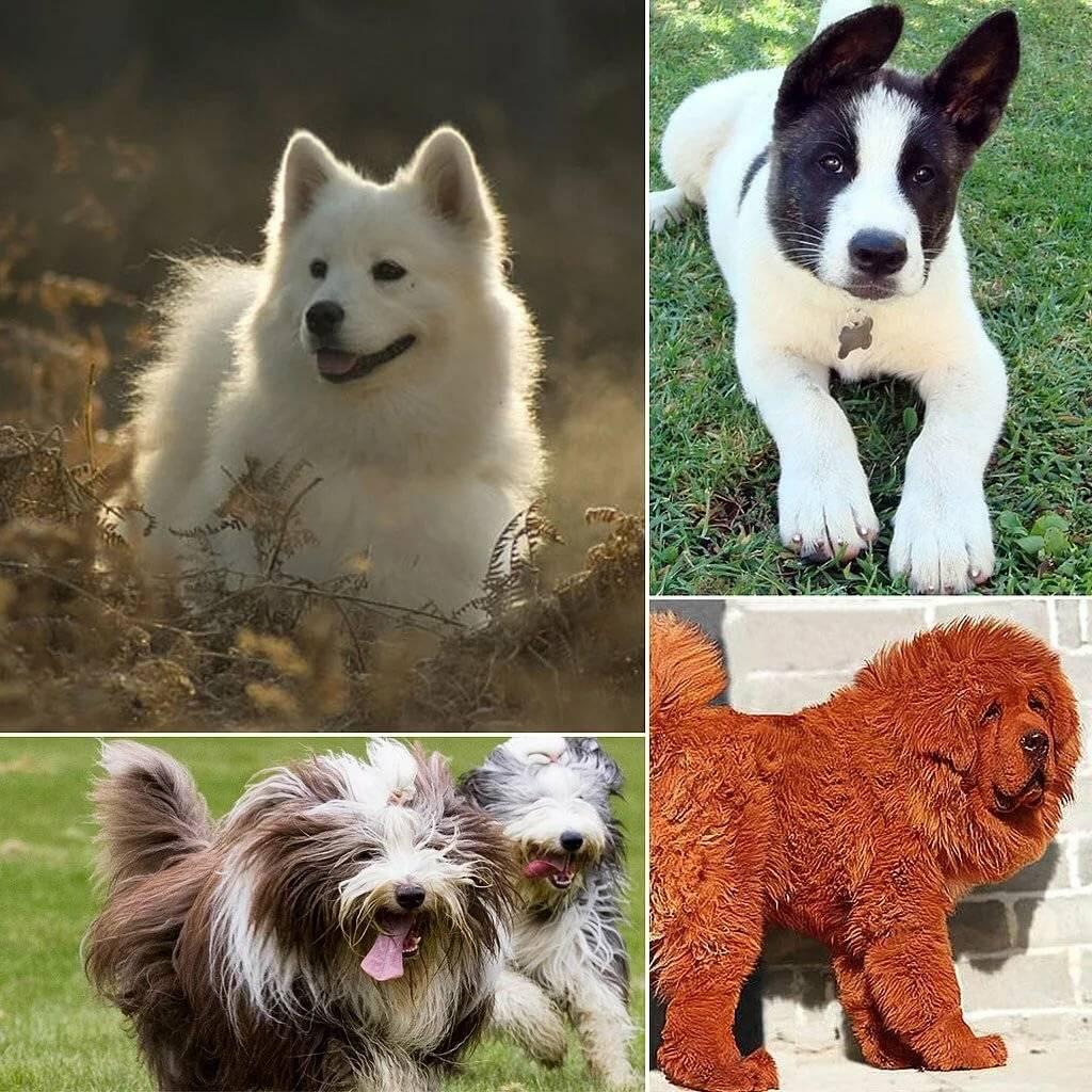 Недорогие породы собак: обзор, описание и характеристика