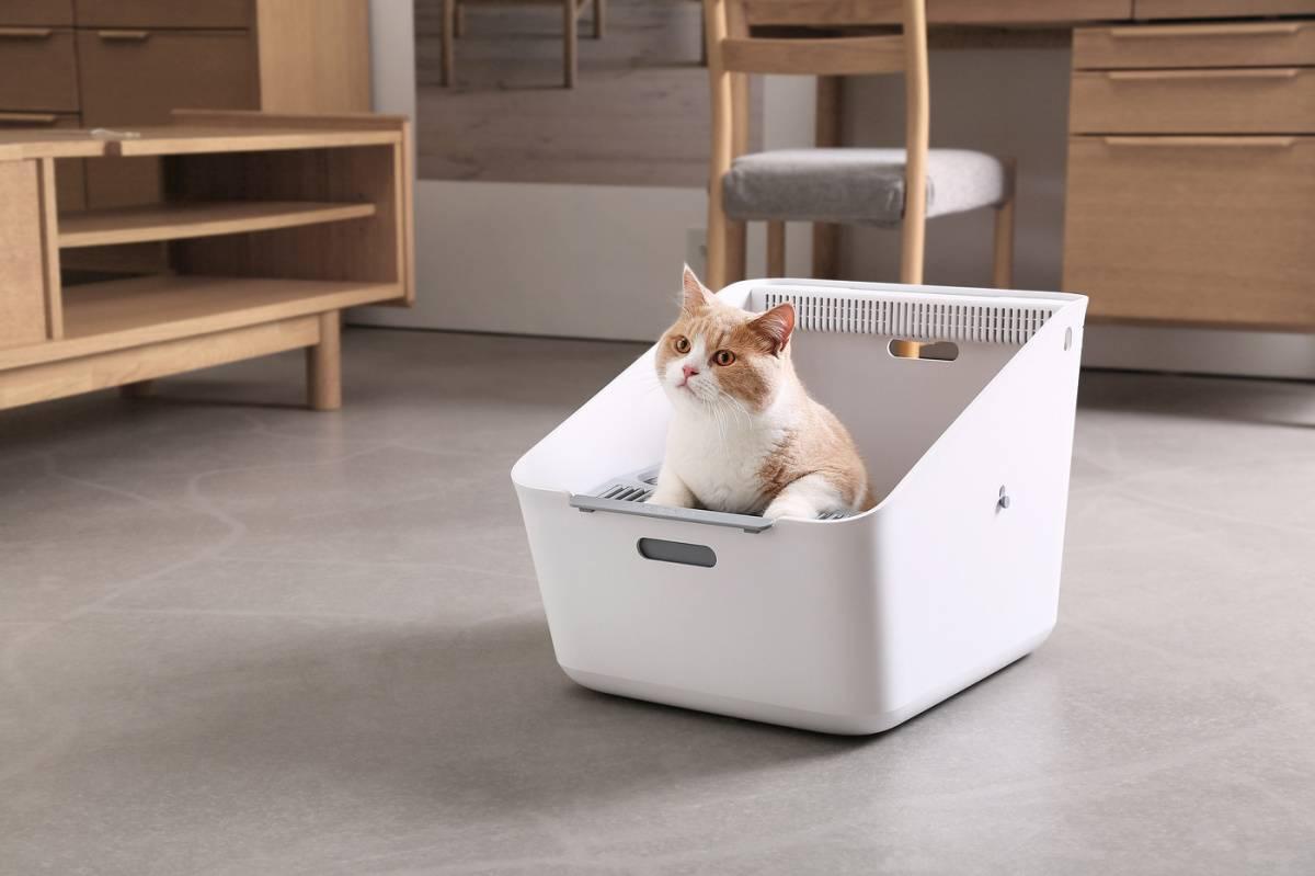 Лучшие наполнители для кошачьего туалета: топ-16 рейтинг 2021