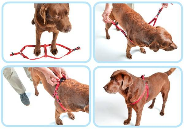 ᐉ шлейка для собак своими руками: выкройки, пошаговая инструкция, как сшить в домашних условиях - kcc-zoo.ru