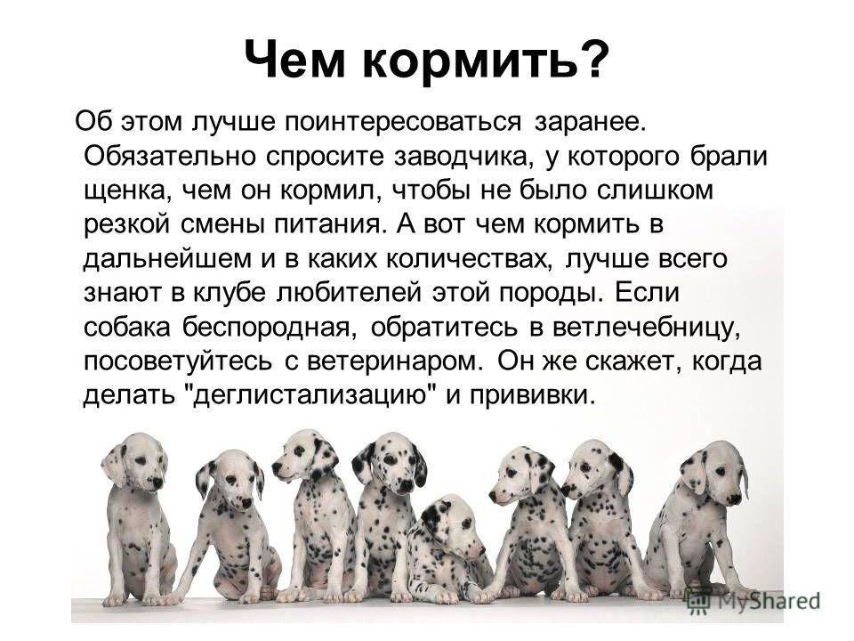 Можно ли собакам молоко