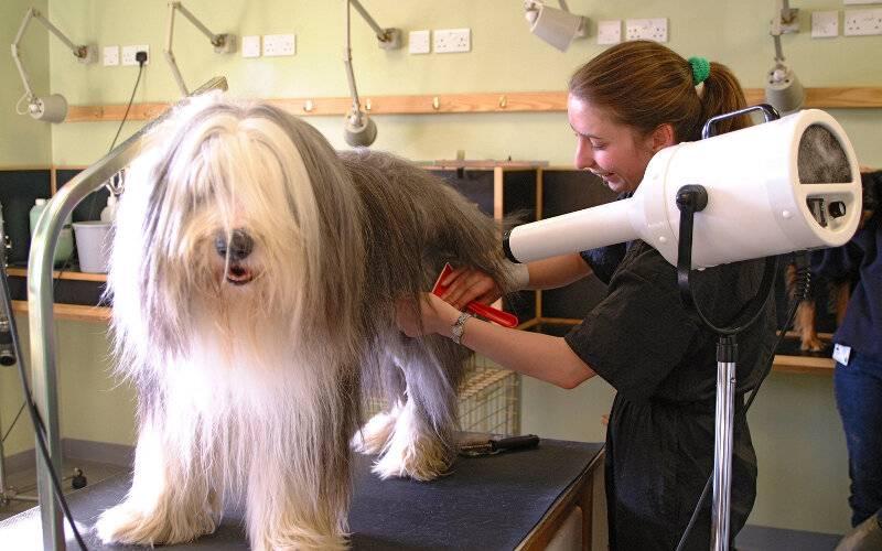 Все, что нужно знать о собачьих стрижках: причины, стрижка в салоне и дома