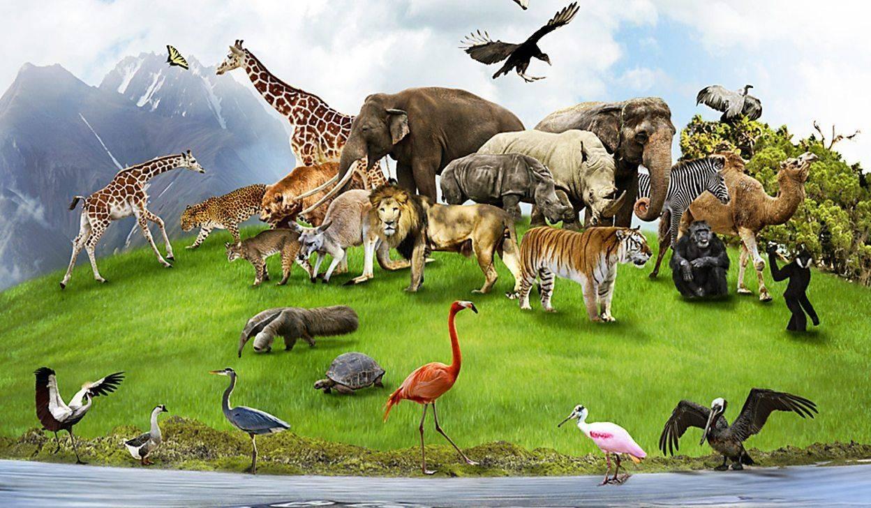 Урок 19: экология животных - 100urokov.ru