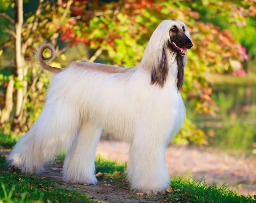 Самые лучшие породы собак в мире