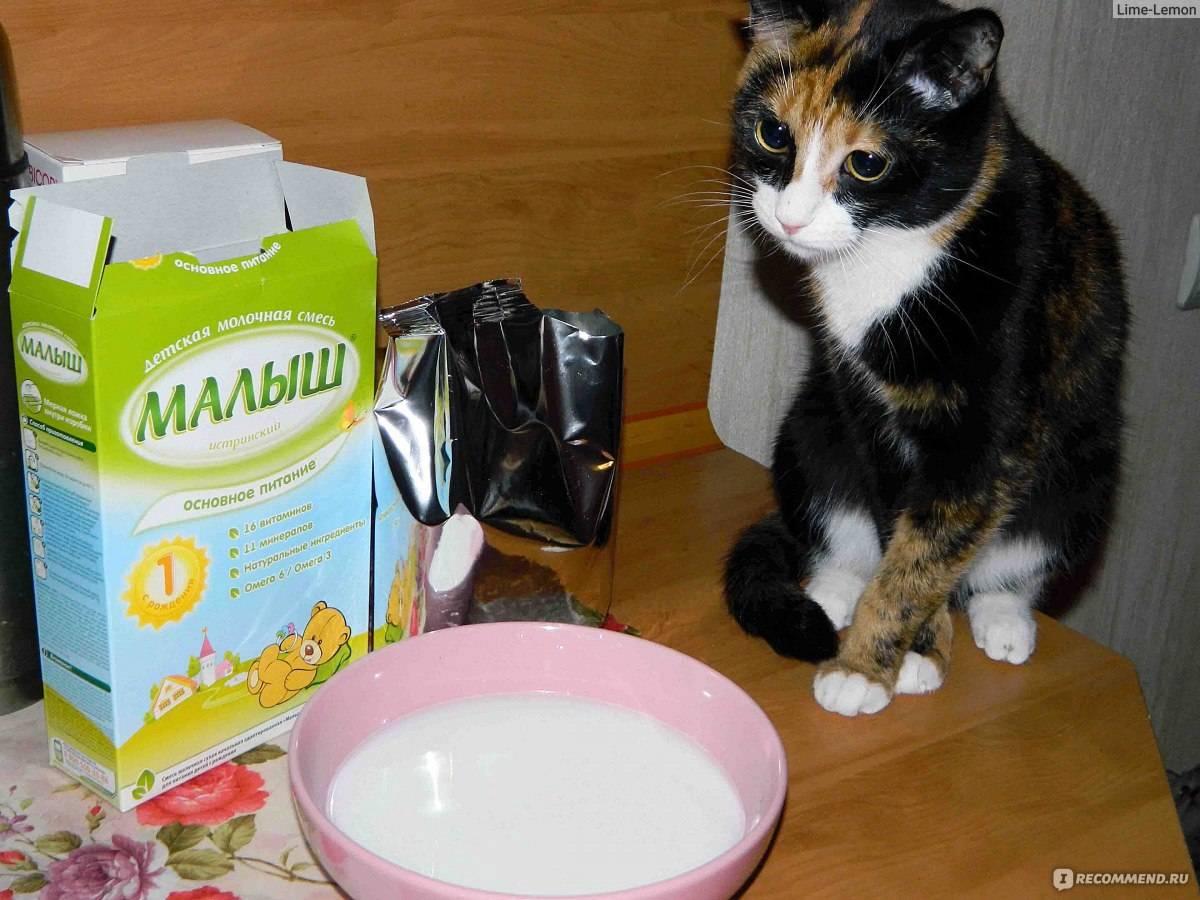 Можно ли кошкам молоко: вредно ли молоко и кисломолочные продукты взрослым кошкам и котятам