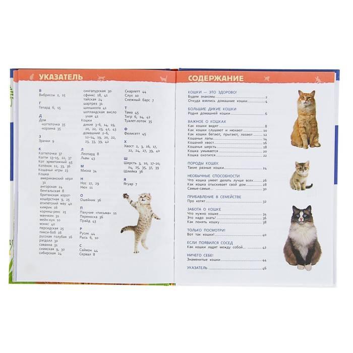 Как приучить котенка к лотку: кошачий этикет