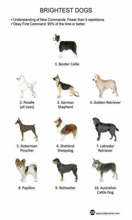 Как узнать породу собаки?