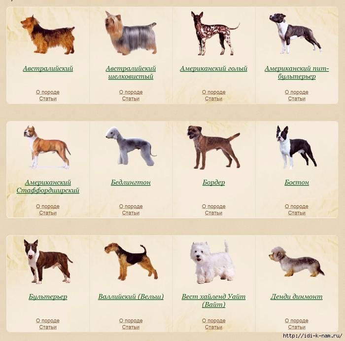 Лучшие собаки для квартиры