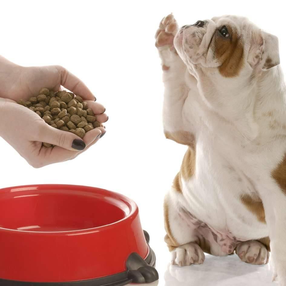 Что делать, если собака перестала есть сухой корм