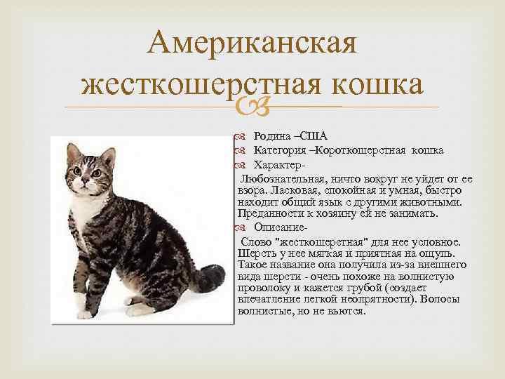 ᐉ анатолийская кошка - описание пород котов - ➡ motildazoo.ru