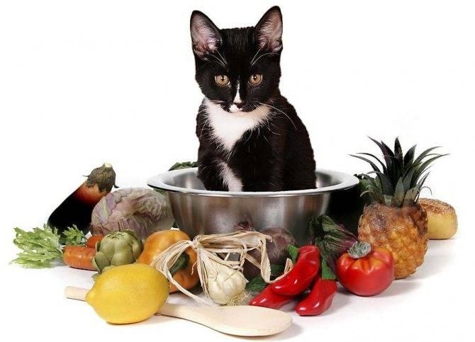 Корм для кормящих кошек: чем кормить животное после родов