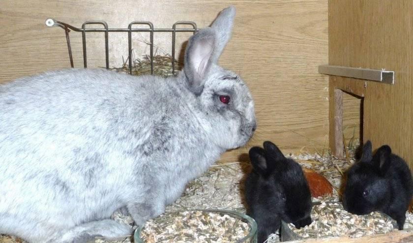 Почему крольчиха отказывается от крольчат сразу после окрола, начинает разбрасывать из гнезда