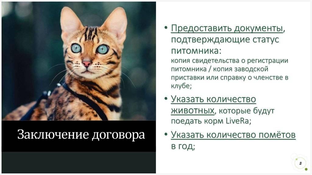 Свой бизнес: кошачий питомник