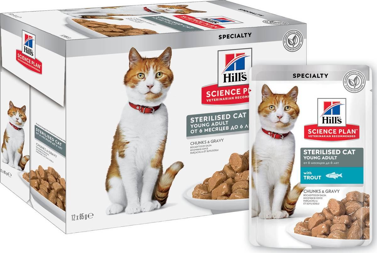 Типы и причины заболеваний желудочно-кишечного тракта у кошек | хиллс