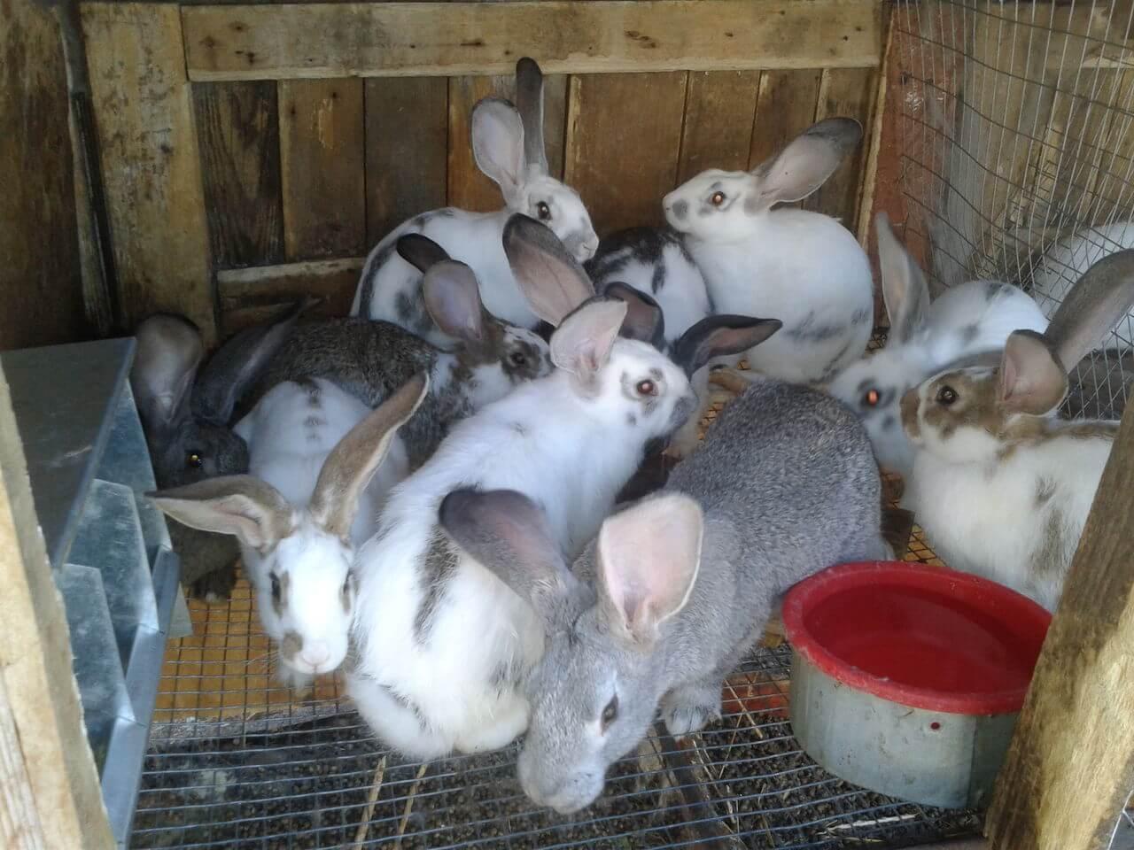 Все, что нужно знать о кроликах