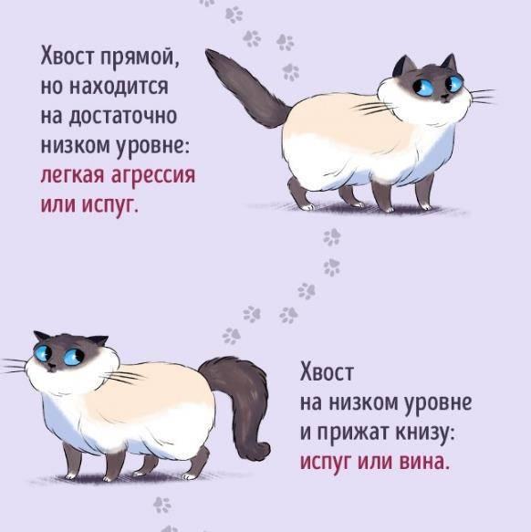 Мяу по‑русски: о чем говорят кошки - полонсил.ру - социальная сеть здоровья - медиаплатформа миртесен