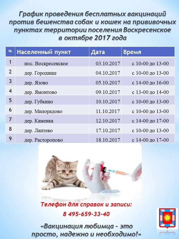 Когда можно глистовать котенка в первый раз: глистование котят