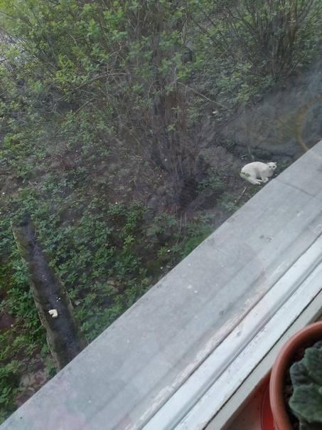 Кошка выпала из окна: что делать