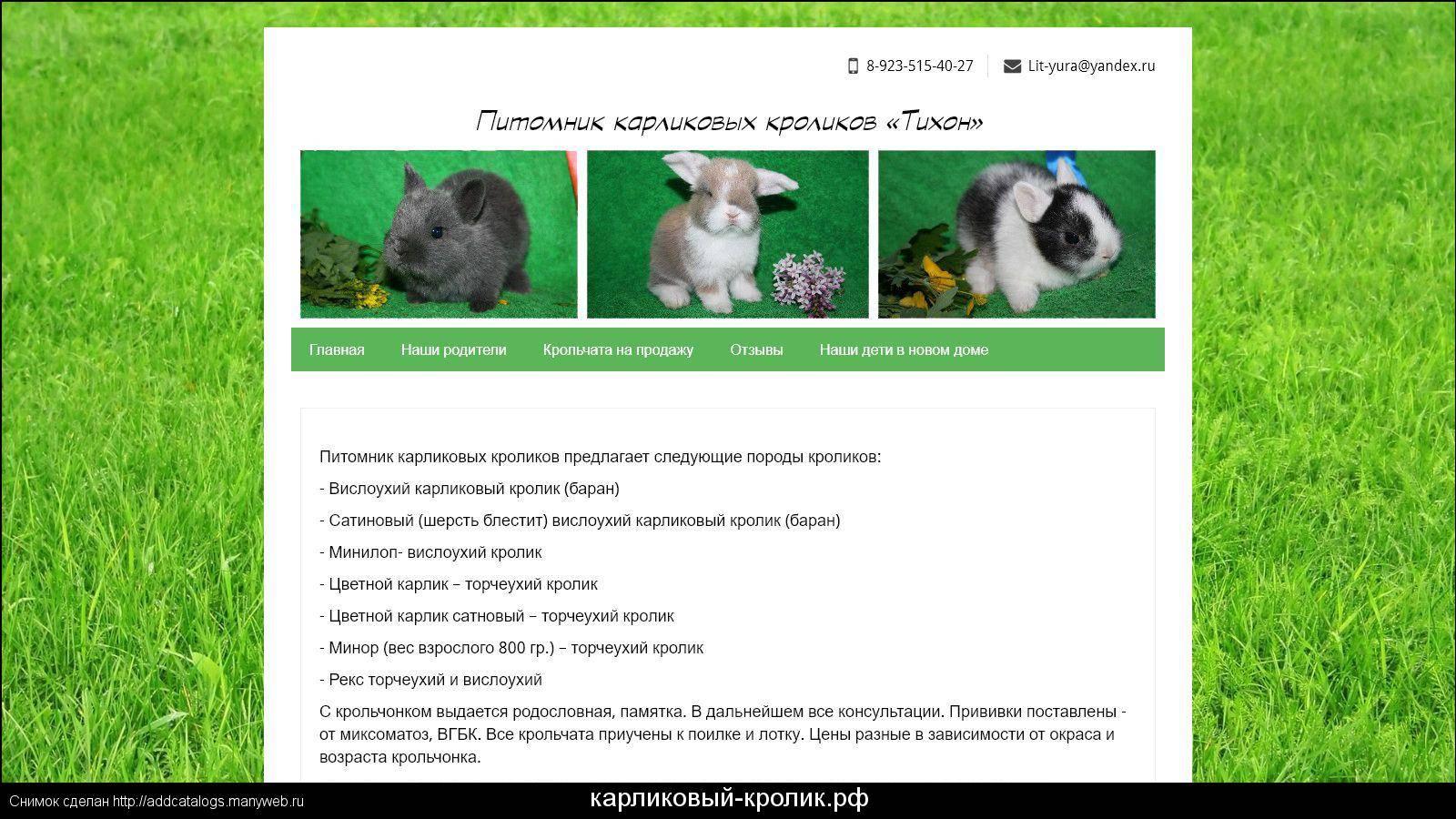 Сколько живут кролики? средняя продолжительность жизни в домашних условиях. как определить возраст кролика? каков срок жизни кроликов в природе?