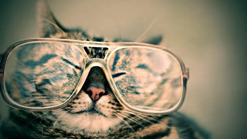 10 научно обоснованных причин завести у себя в доме кота