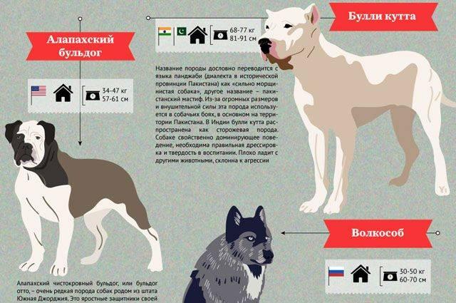 Список потенциально опасных пород собак по данным мвд россии в 2019 году