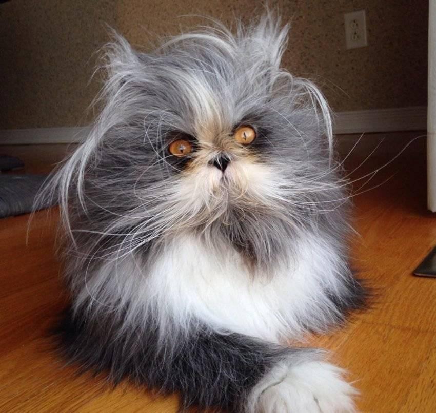 Пушистые кошки | породы самых пушистых котов с фото и названиями
