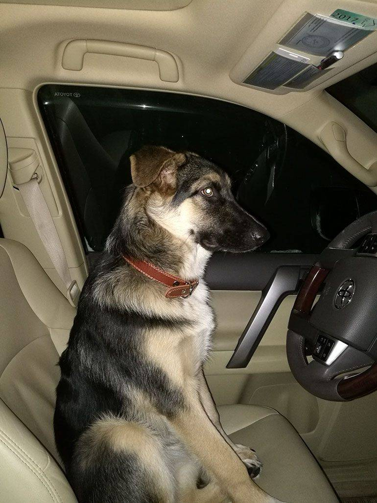 Собака и транспорт. как перевозить собаку в автобусе, троллейбусе, трамвае