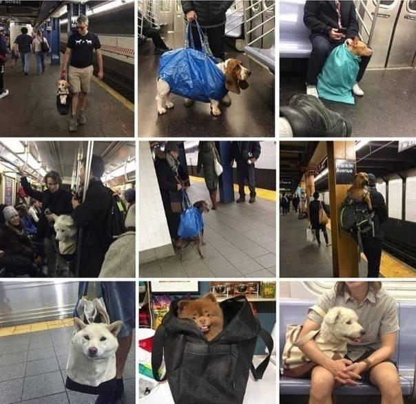 Как перевезти собаку в транспорте: самолете, в поезде, машине, автобусе, электричке, такси, за границу, на велосипеде, в метро, большую и маленькую