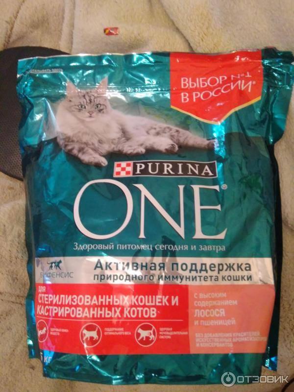 Рейтинг кормов для стерилизованных кошек и кастрированных котов: какие сухие продукты лучшие?