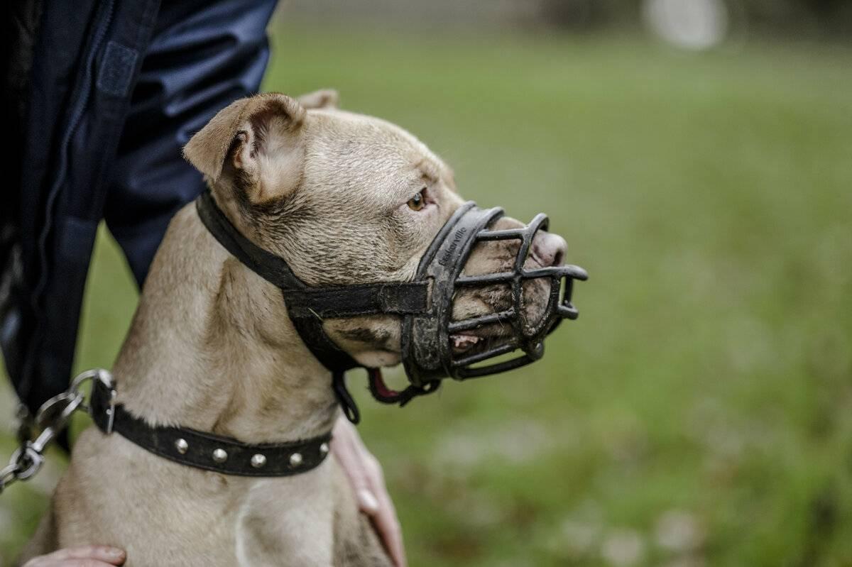 Закон и правила выгула собак в россии: где можно гулять, а также о намордниках, поводках и ответственности за их отсутствие