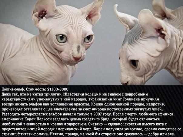 Какие кошки считаются самыми злыми: топ-10 наиболее агрессивных и злопамятных пород