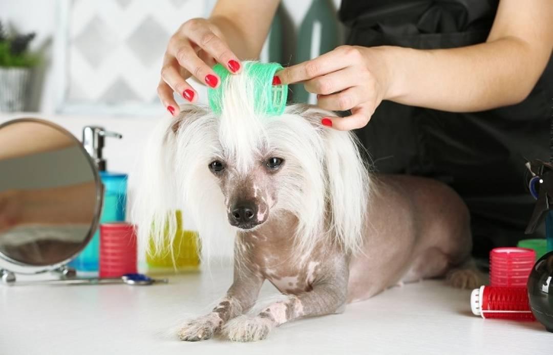 Схемы стрижек собак по породам