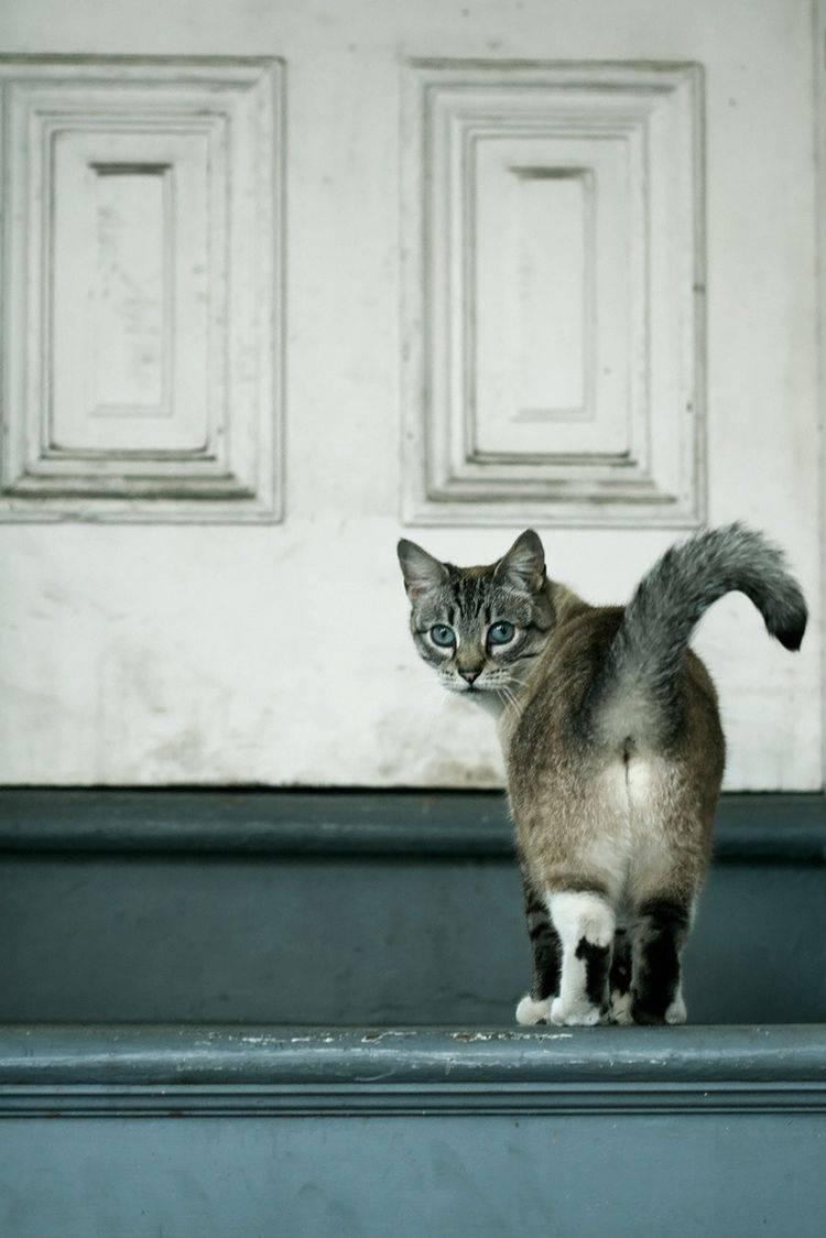 5 признаков того, что вы раздражаете свою кошку