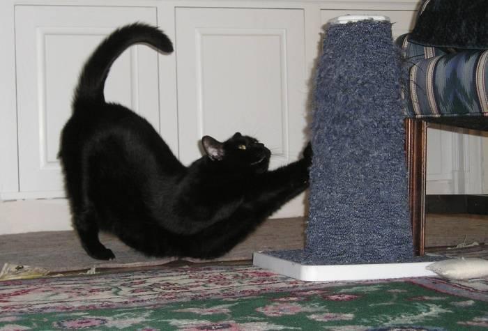 Как отучить кота драть мебель, обои, шторы и другие вещи в доме