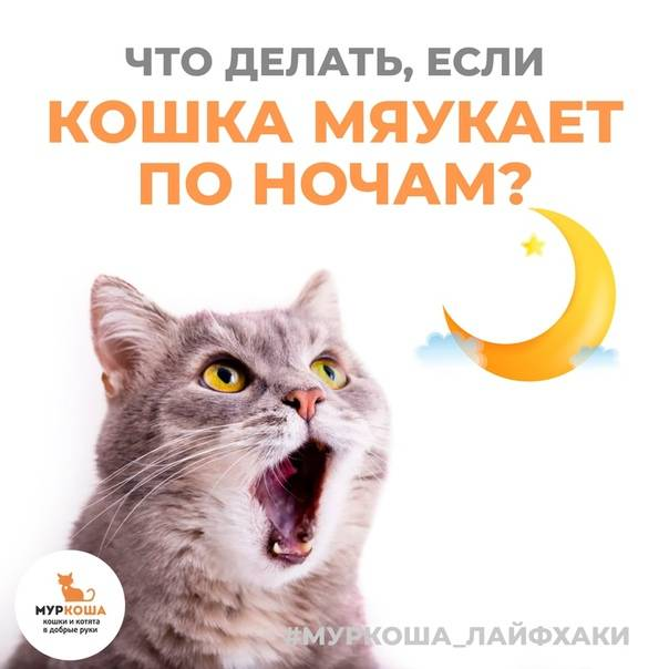 Почему орет кошка и что делать?
