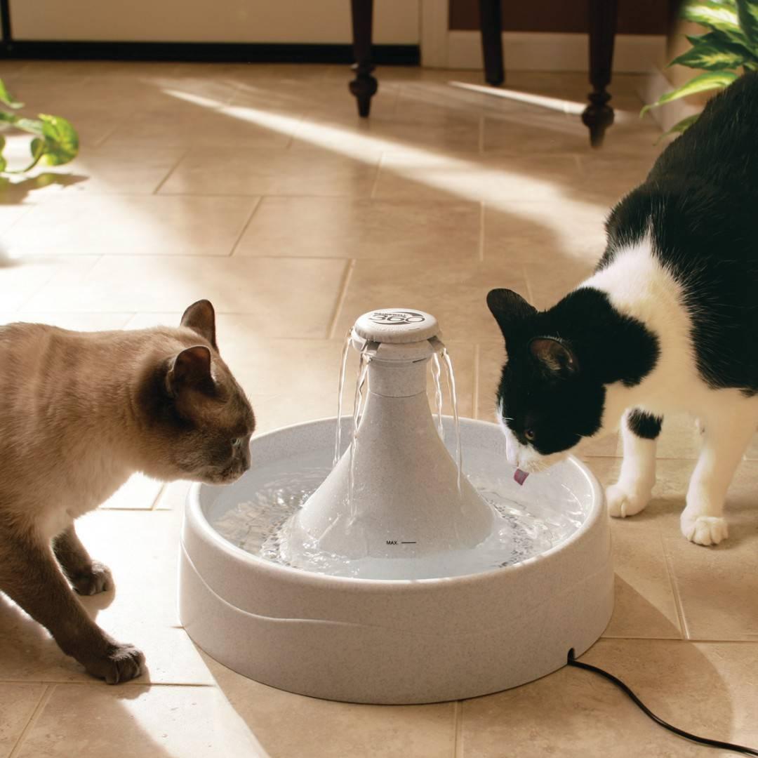 Поилки для кошек — виды, модели, рейтинг лучших поилок 2019 года. советы как сделать поилку своими руками (видео + 115 фото)