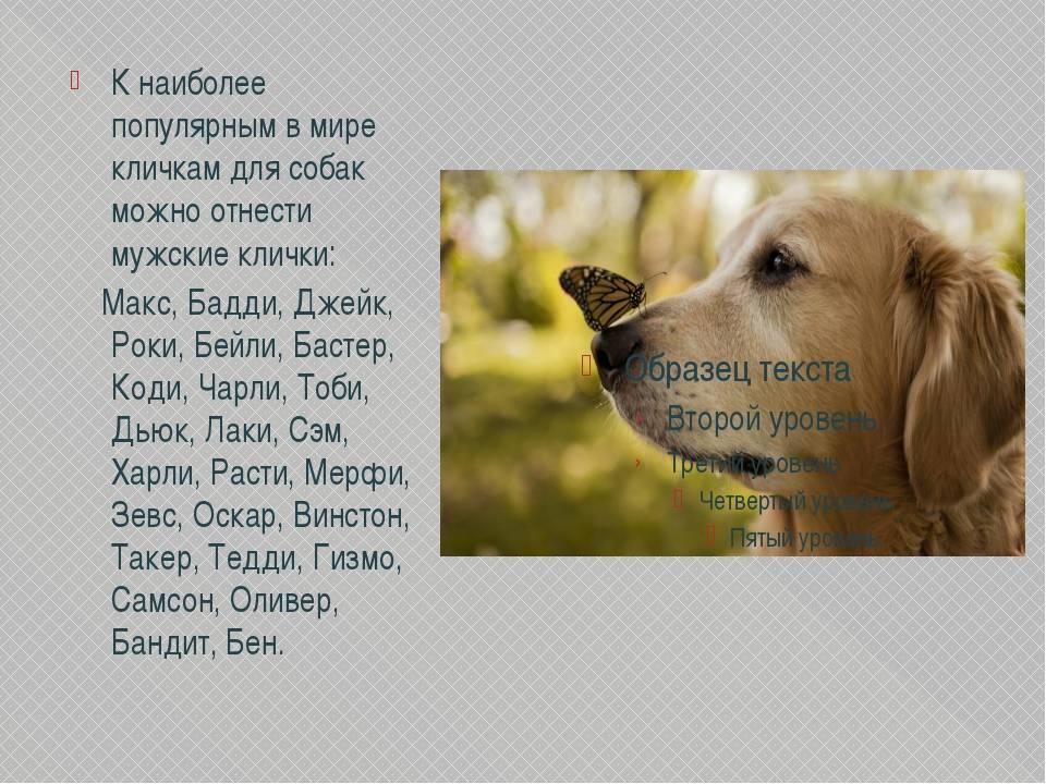 Имена, клички для собак мальчиков: как можно назвать щенка маленьких и крупных пород