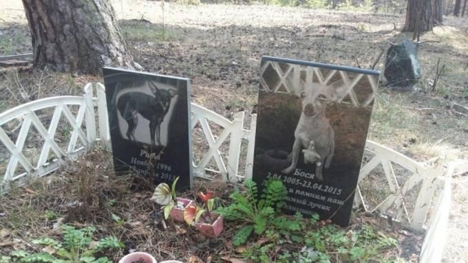 Советы экспертов, как и где правильно похоронить собаку: правила и ошибки