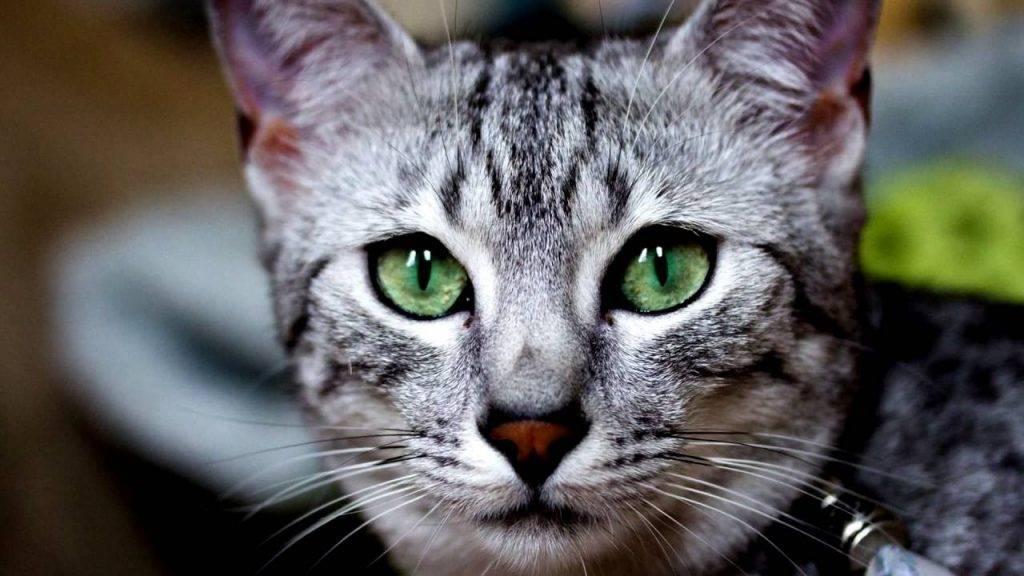 Кошки в древнем египте — википедия. что такое кошки в древнем египте
