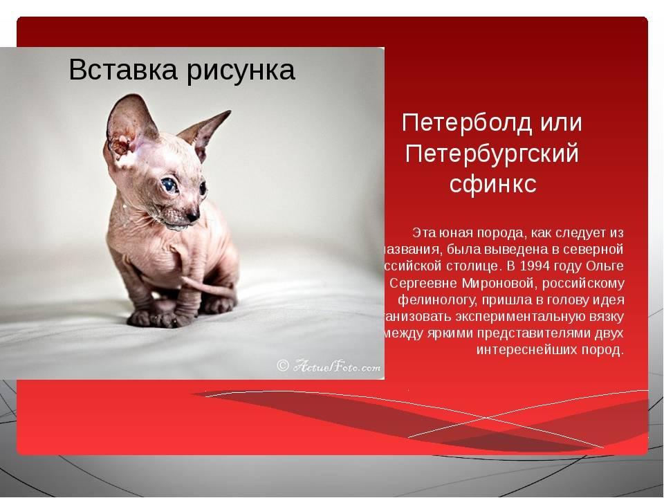 Описание и характер породы сфинкс петерболд