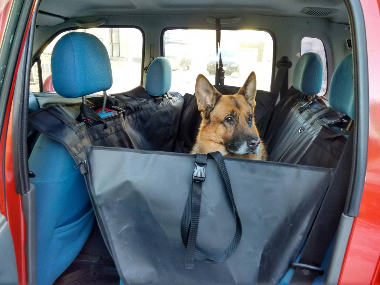 Как перевозить животное, чтобы не испортить салон машины