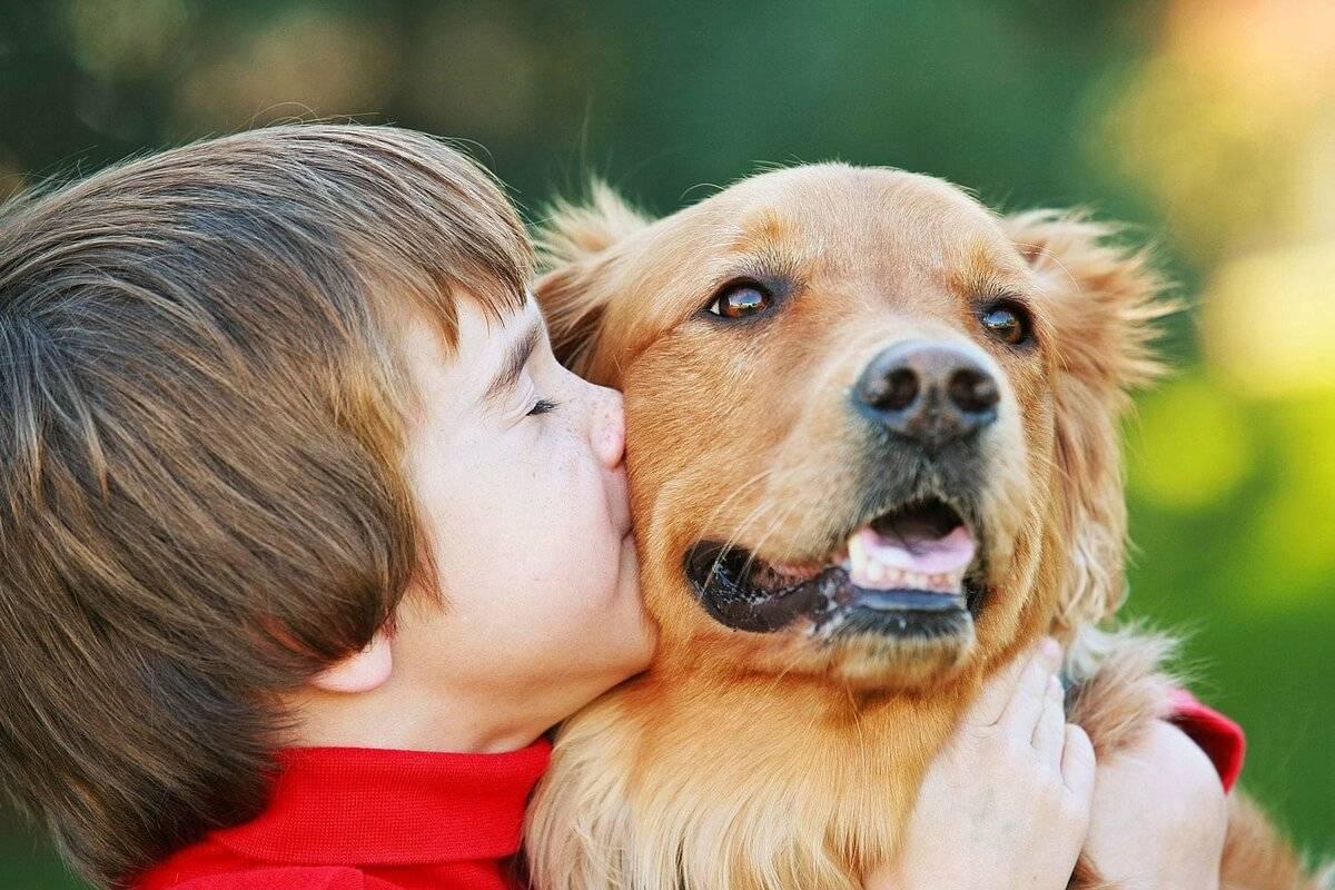 ?лучшие породы собак для детей - [#топ-24]