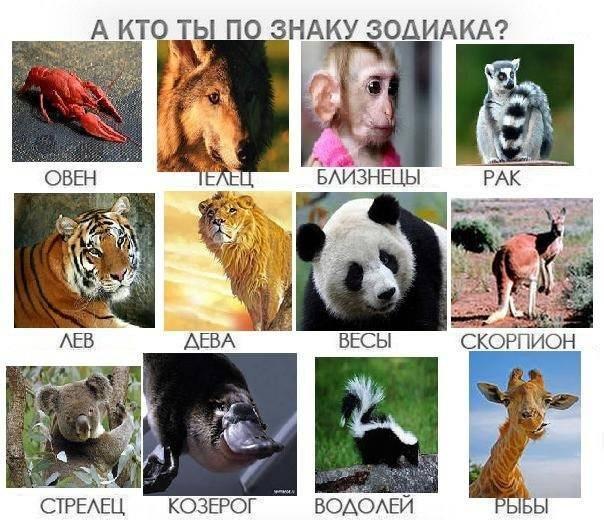 Ваше тотемное животное согласно вашему знаку зодиака