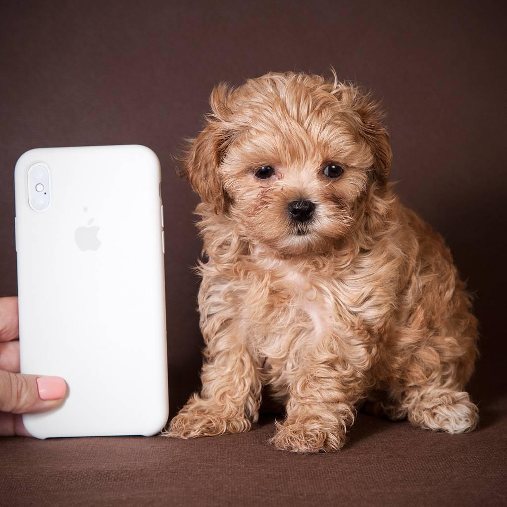 Породы гипоаллергенных собак: список, фото и видео