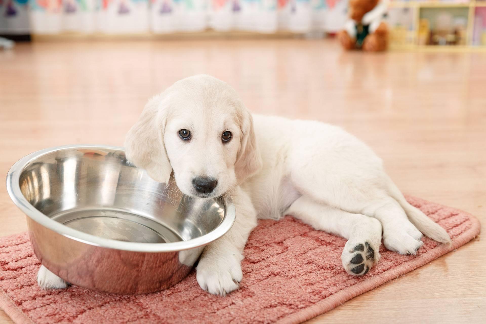 Прогулка с собакой: сколько нужно гулять, когда кормить, что взять с собой, чем заняться, правила выгула, гигиена