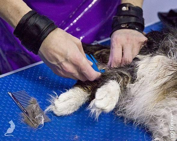Виды колтунорезов для кошек: отзывы и рекомендации по выбору инструмента