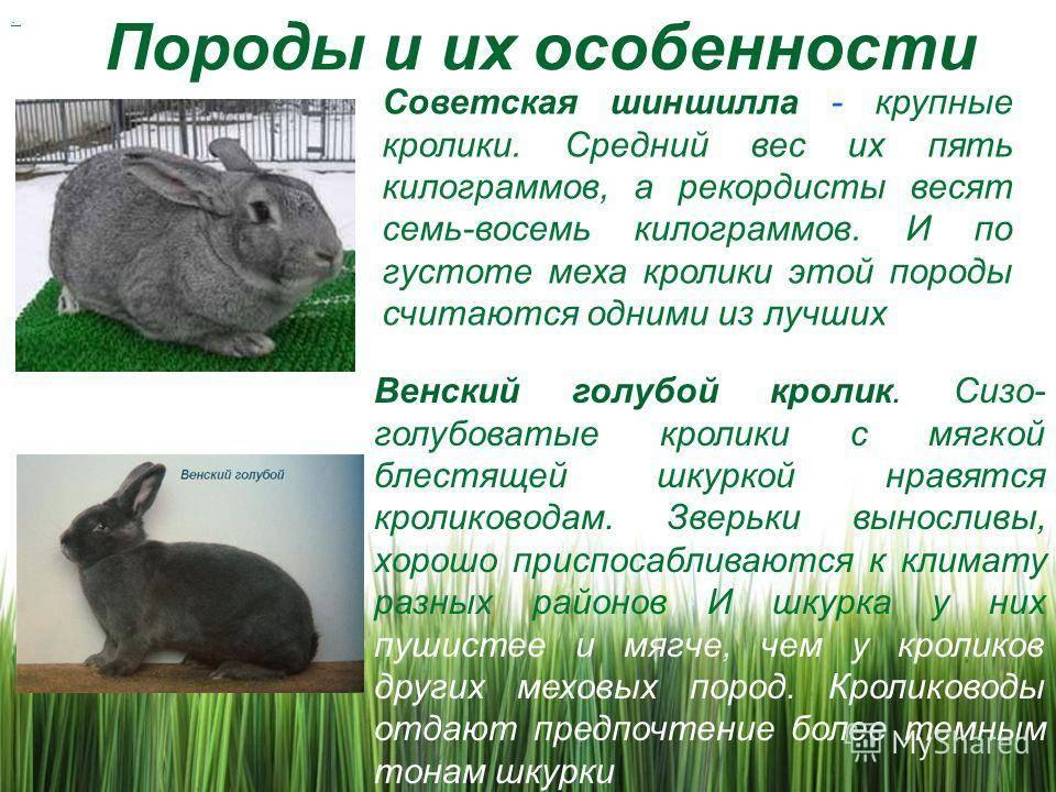 Карликовый кролик: породы, уход и содержание, чем отличается от декоративного, как назвать, продолжительность жизни